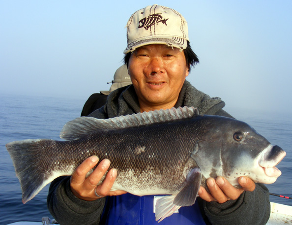 Image gallery tautog fish for Ri fishing charters